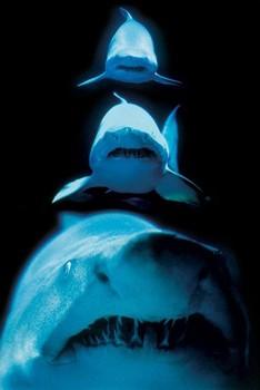 Shark atack - shark Poster
