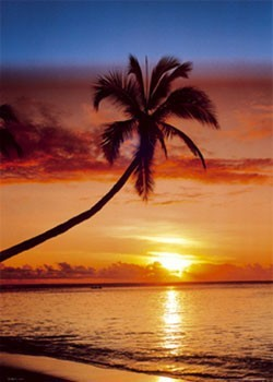 Pôster Sunset & palm tree