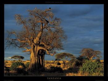 Tanzania Art Print