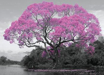 Tree - Blossom Poster, Art Print