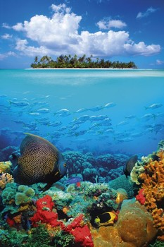 Tropical underwater Poster