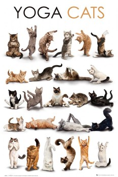 Yoga cats Poster, Art Print