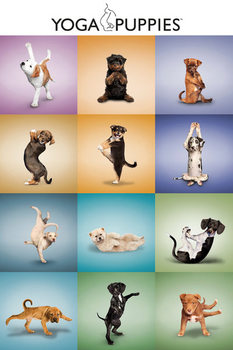 Pôster Yoga - Puppies Grid