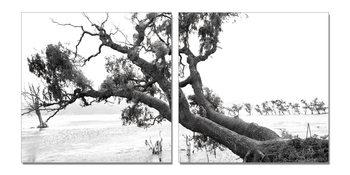 Praying Tree (B&W) Tableau Multi-Toiles