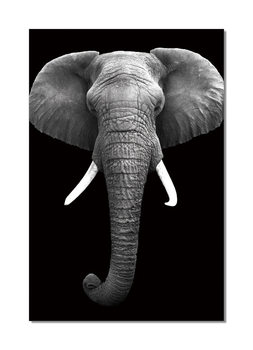 African Elephant (B&W) Mounted Art Print