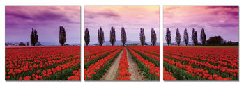 Flower fields Mounted Art Print