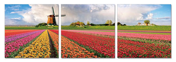 Holland - Fields with Tulips Mounted Art Print