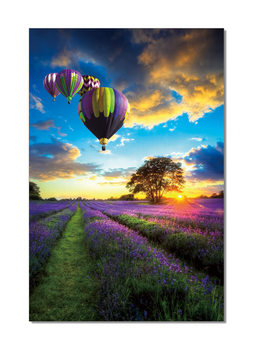 Lavender Field - Hot Air Balloons Mounted Art Print