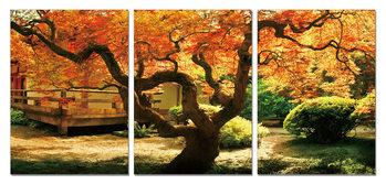 Maple Tree in Autumn Mounted Art Print