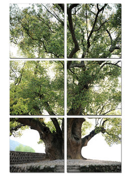Old Tree Mounted Art Print