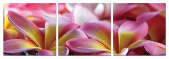 Pink Blossoms Mounted Art Print