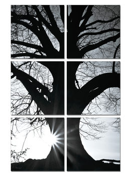 Tree - Silhouette (B&W)  Mounted Art Print