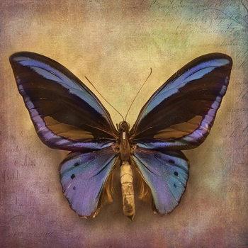 Quadro em vidro Butterfly - Blue