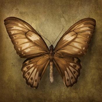 Quadro em vidro Butterfly - Brown