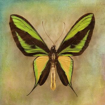 Quadro em vidro Butterfly - Green