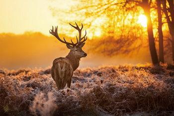 Quadro em vidro Deer - Sunny Forest