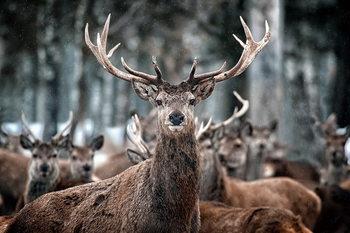 Quadro em vidro Deer - What's Up?