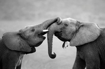 Quadro em vidro Elephant - Friends
