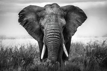 Quadro em vidro Elephant - Nature b&w