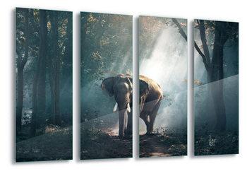 Quadro em vidro  Elephant Path