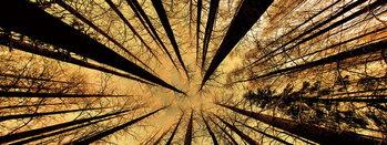 Quadro em vidro Forest - Gold Sun