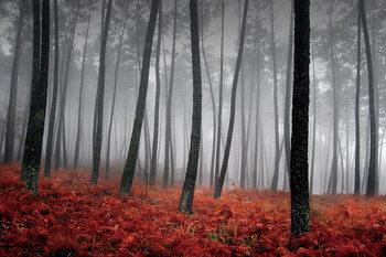 Quadro em vidro Forest - Red Leaves