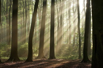 Quadro em vidro Forest - Sunbeams