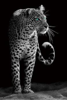 Quadro em vidro Gepard - Black and White
