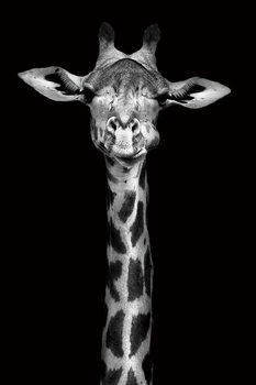 Quadro em vidro Giraffe - Head b&w