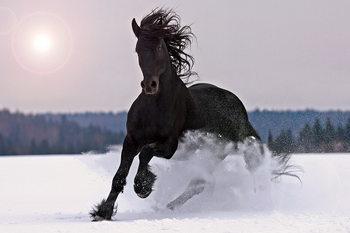Quadro em vidro Horse - Black Horse in the Snow