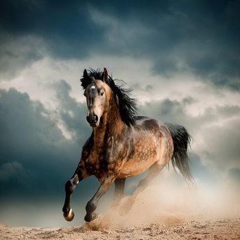Quadro em vidro Horse - Running in the Dust