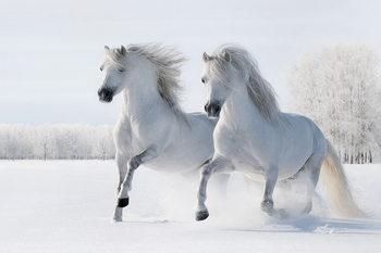 Quadro em vidro Horses - Two White Horses