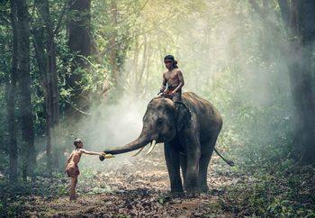 Quadro em vidro Jungle Friends