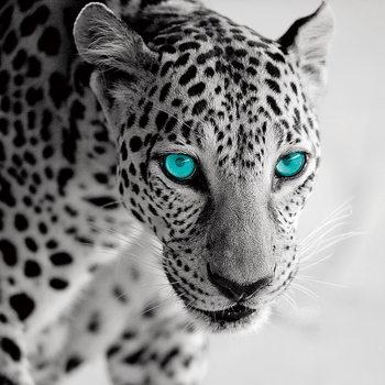 Quadro em vidro Leopard b&w