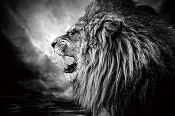 Quadro em vidro Lion - Lion at Night