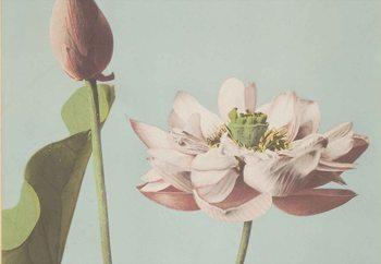Quadro em vidro  Lotus Blossom, Ogawa Kazumasa.