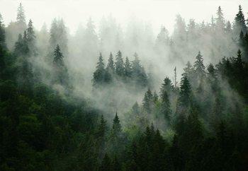 Quadro em vidro Misty Forest