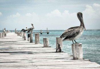 Quadro em vidro Pelican Patrol