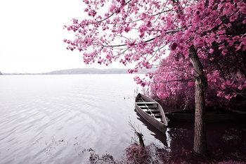Quadro em vidro Pink World - Blossom Tree with Boat 1