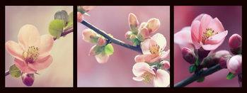 Quadro em vidro Pink World - Pink Orchid