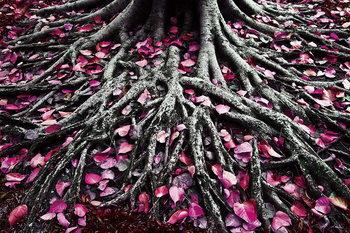 Quadro em vidro Pink World - Pink Roots