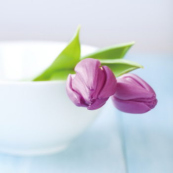 Quadro em vidro Purple Tulipans in the Bowl