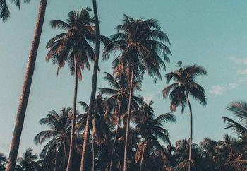 Quadro em vidro Retro Palms