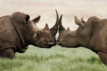Quadro em vidro Rhino - Love