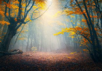 Quadro em vidro The Enchanted Forest