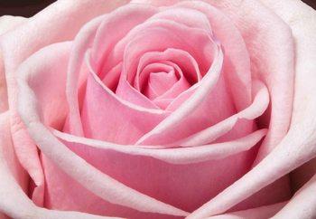 Quadro em vidro The Sensual Rose