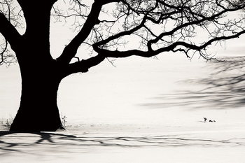 Quadro em vidro Tree - Black and White