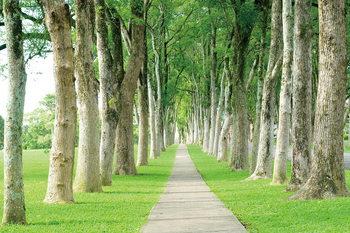 Quadro em vidro Trees - Guided Path