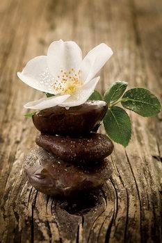 Quadro em vidro  Zen - Blossom