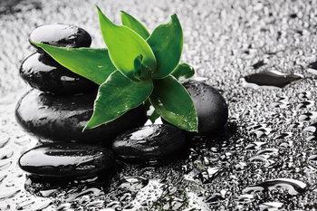 Quadro em vidro  Zen - Green nature